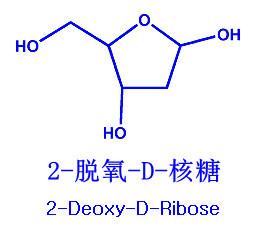 2 - дезокси - д - рибоза